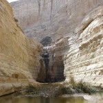 Pools in Negev1