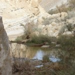 Pools in Negev4