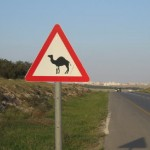 Camel Crossing, Arad to Be'er Sheva