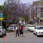 Downtown Jackaronda - 13May05