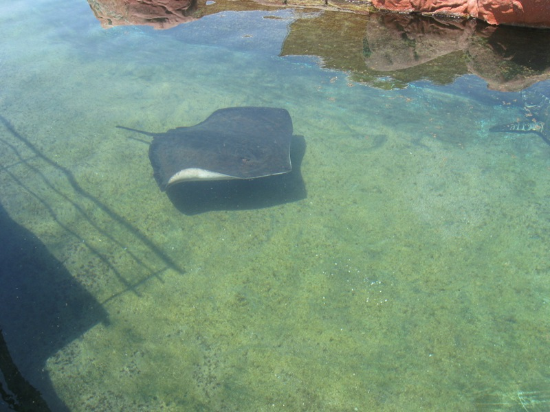 Coral World Underwater Observatory - Eilat ? Streams in the Negev