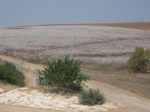 Fields White for Harvest - 30Sep2011