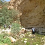 Sheer - Wadi Arugot - 27July13