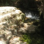 Water flows all year - Wadi Arugot - 27July13