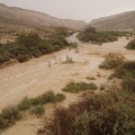 Streams in the Negev -- Nahal Zin